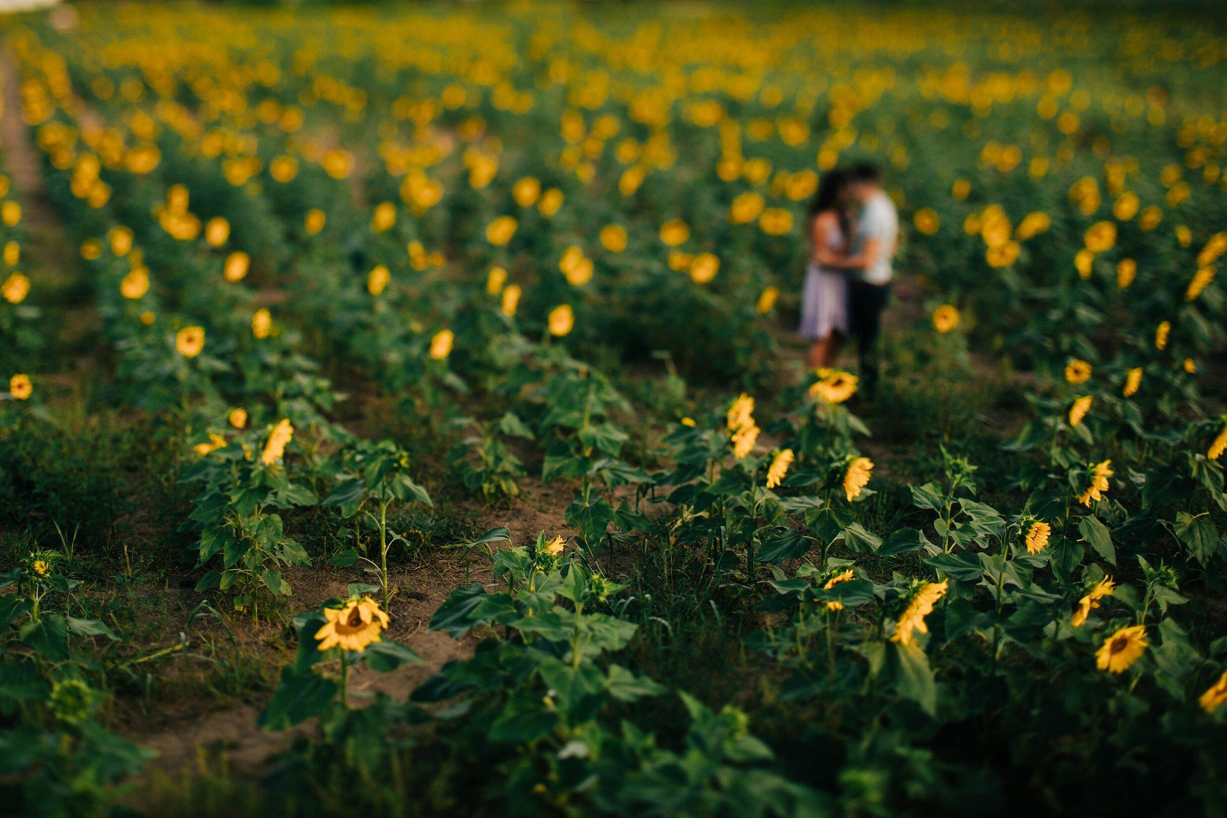 sunflower-field-engagement-session-nj_0007.jpg