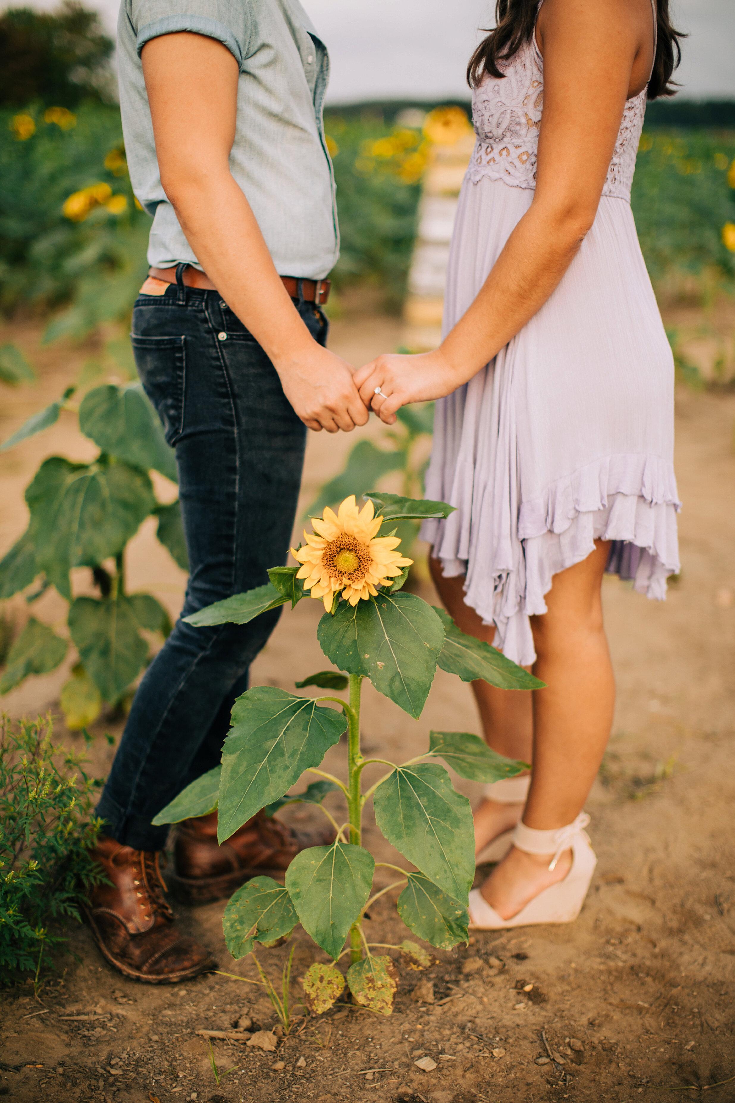 sunflower-field-engagement-session-nj_0011.jpg