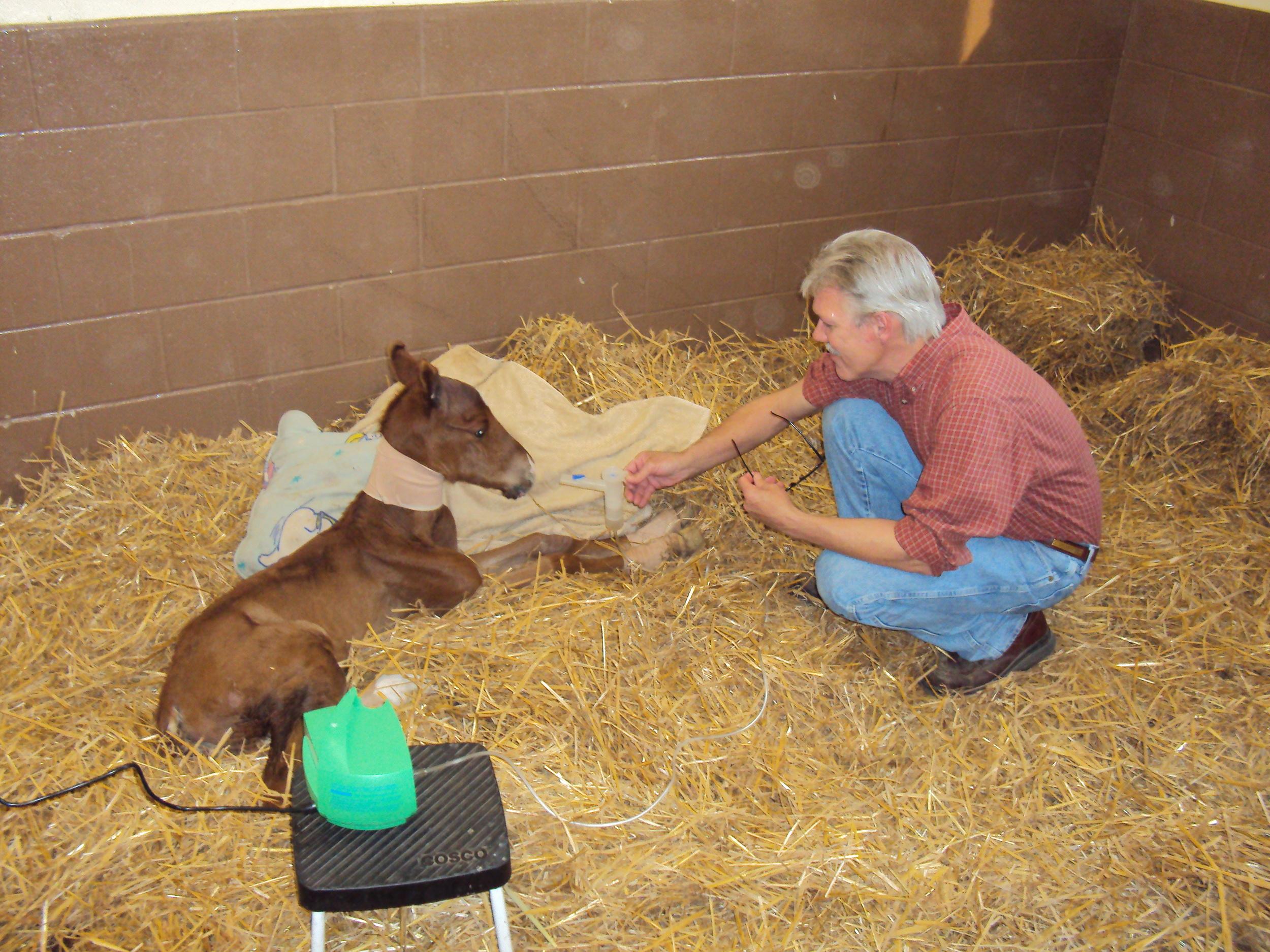 Sick Foal.JPG