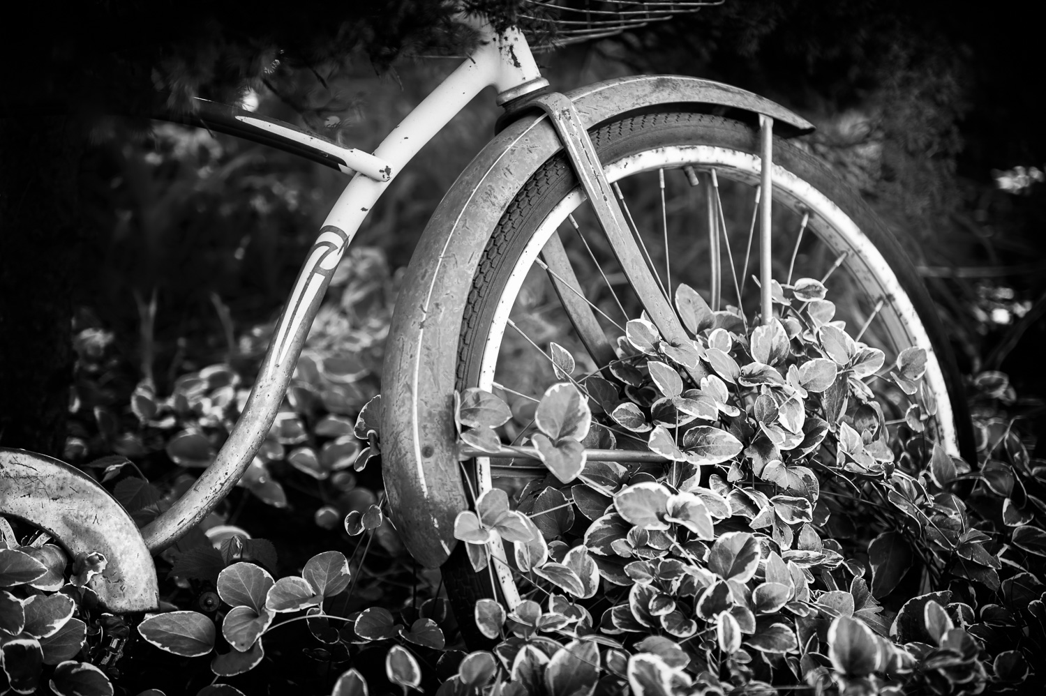 Pedals of Ivy