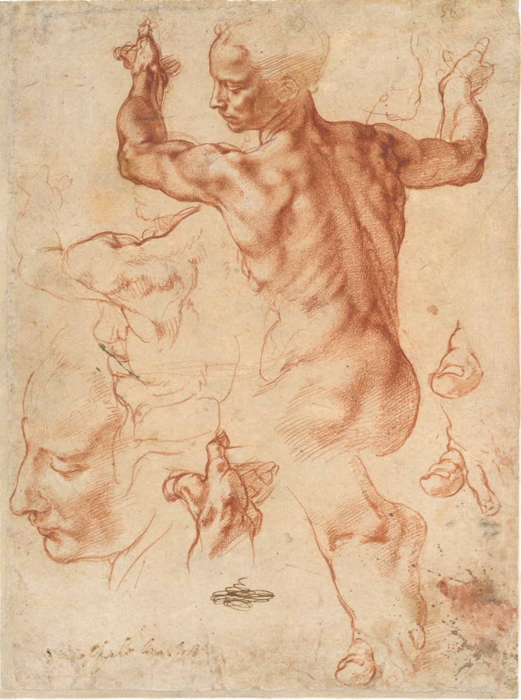 Michelangelo-5.jpg