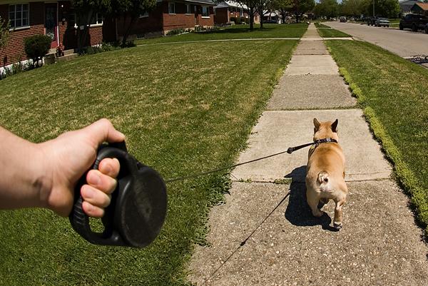 A dog is walking on a flexi leash