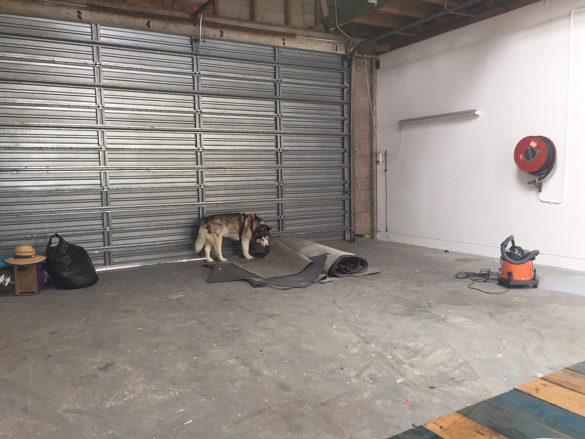 dog-checks-out-new-facility.jpg