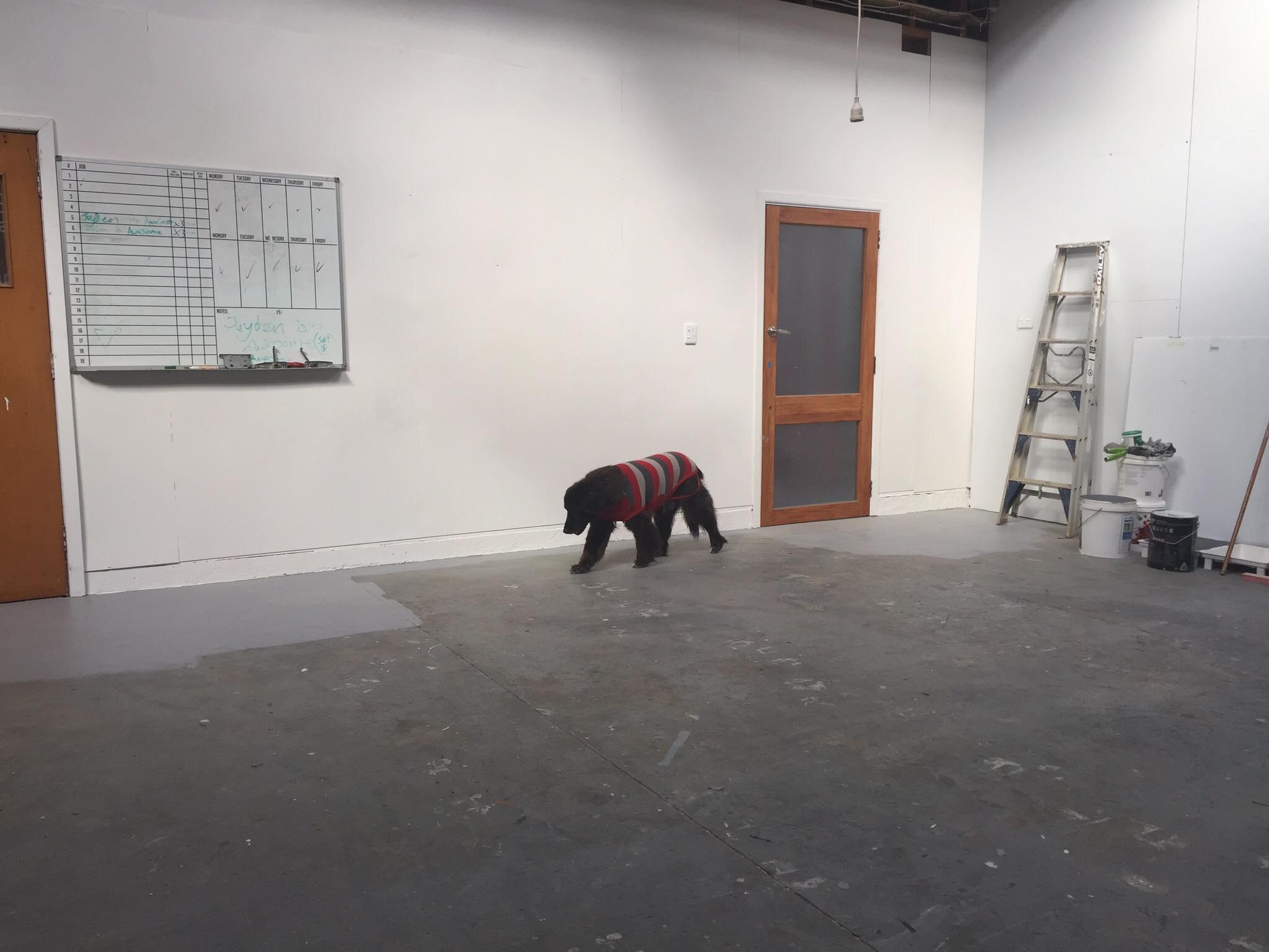 dog-checks-new-facility.jpg