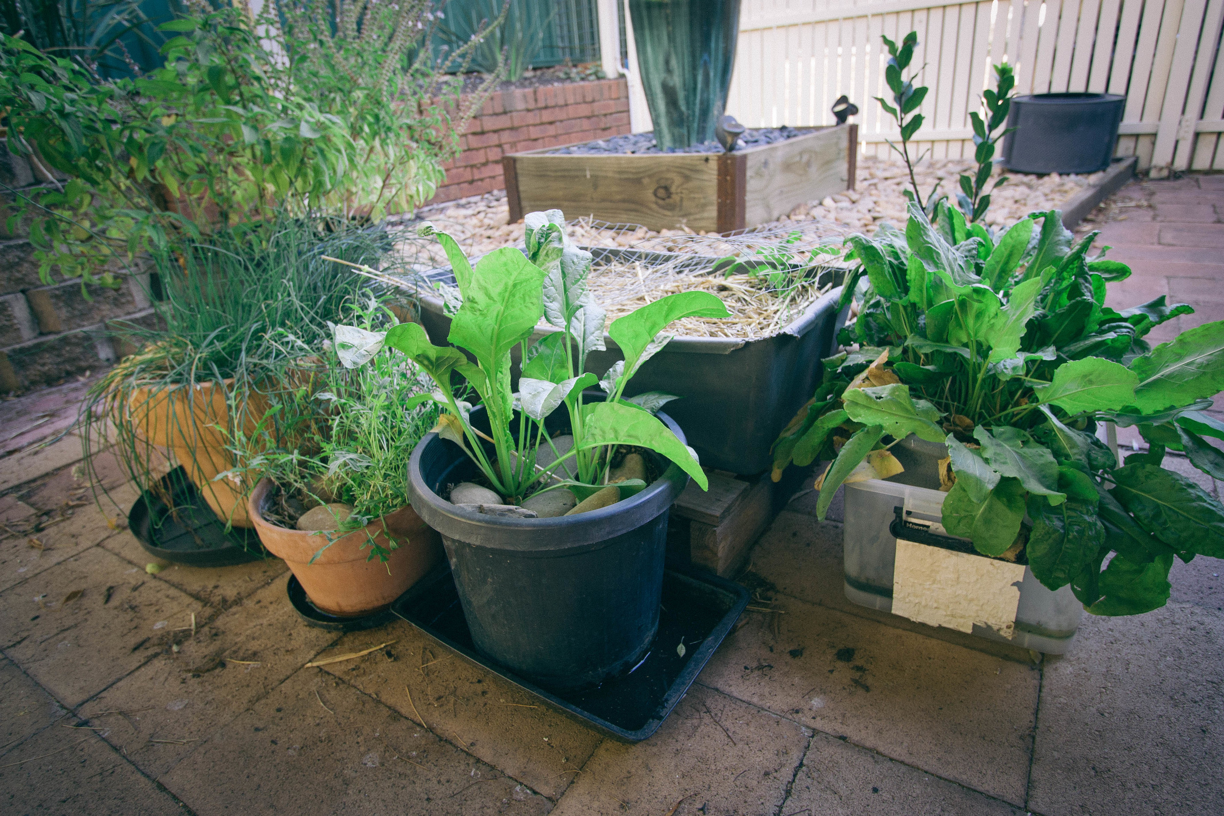 Potted Garden    rebeccashann.com