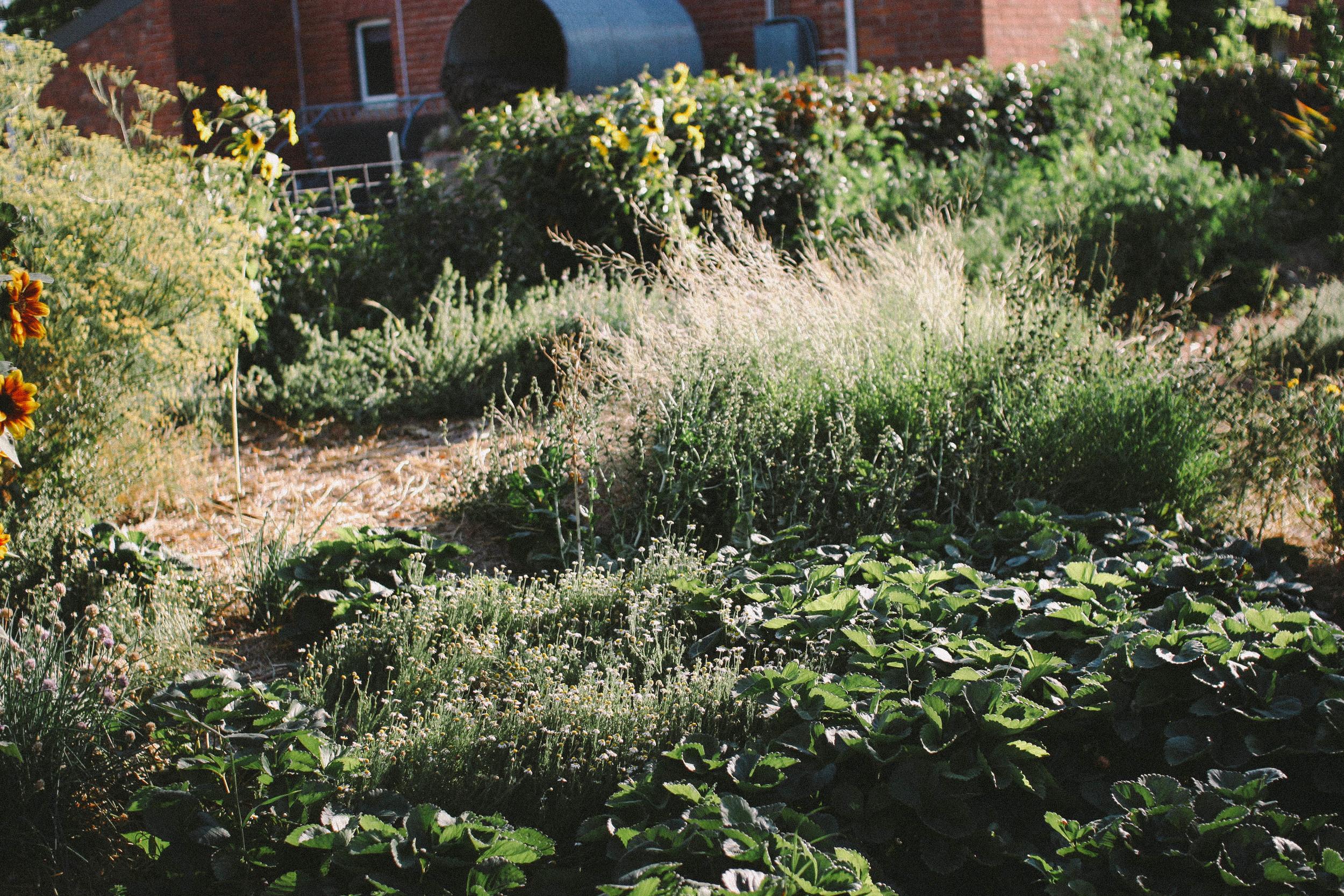 Flower Garden || rebeccashann.com