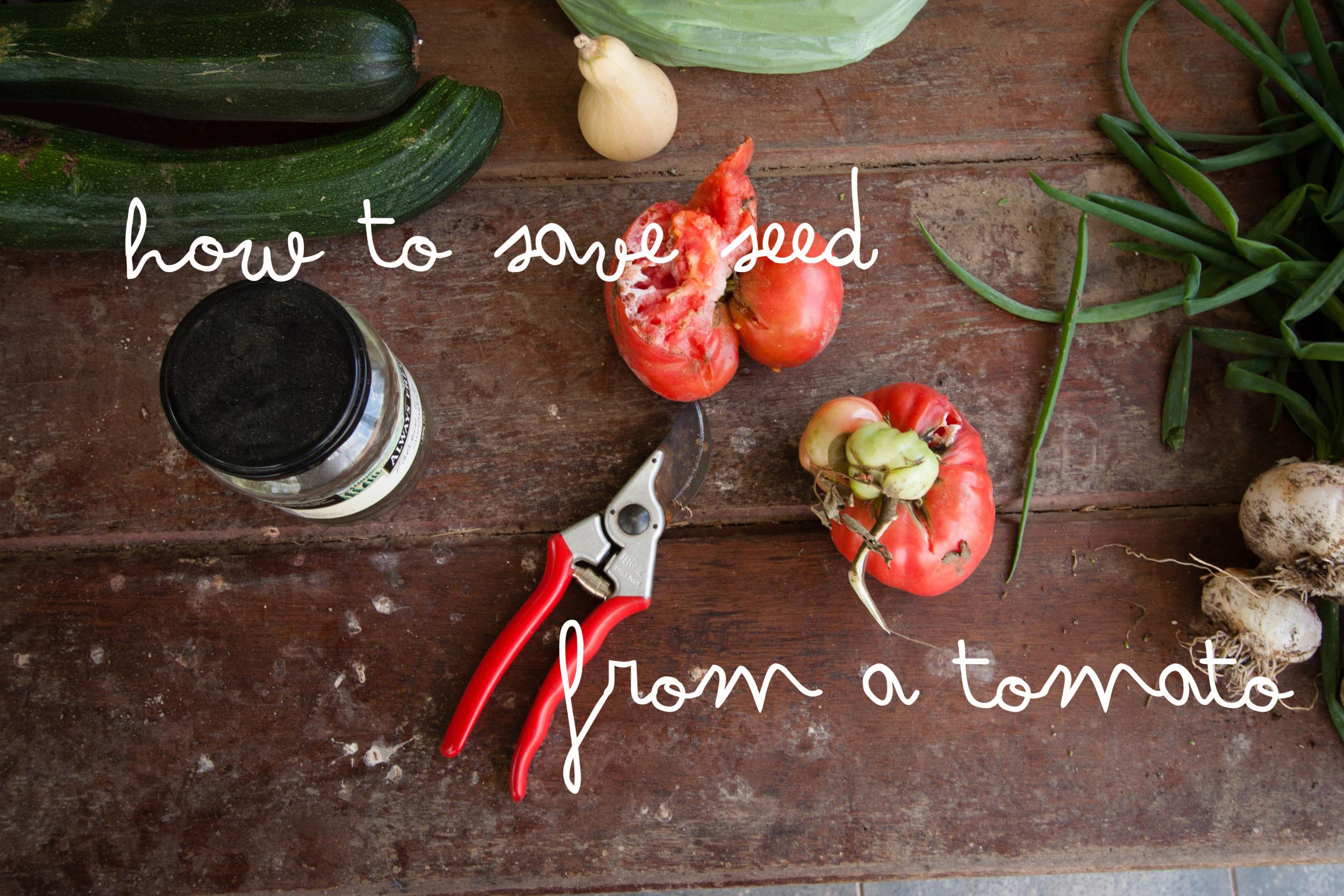 Seed Saving Tomato