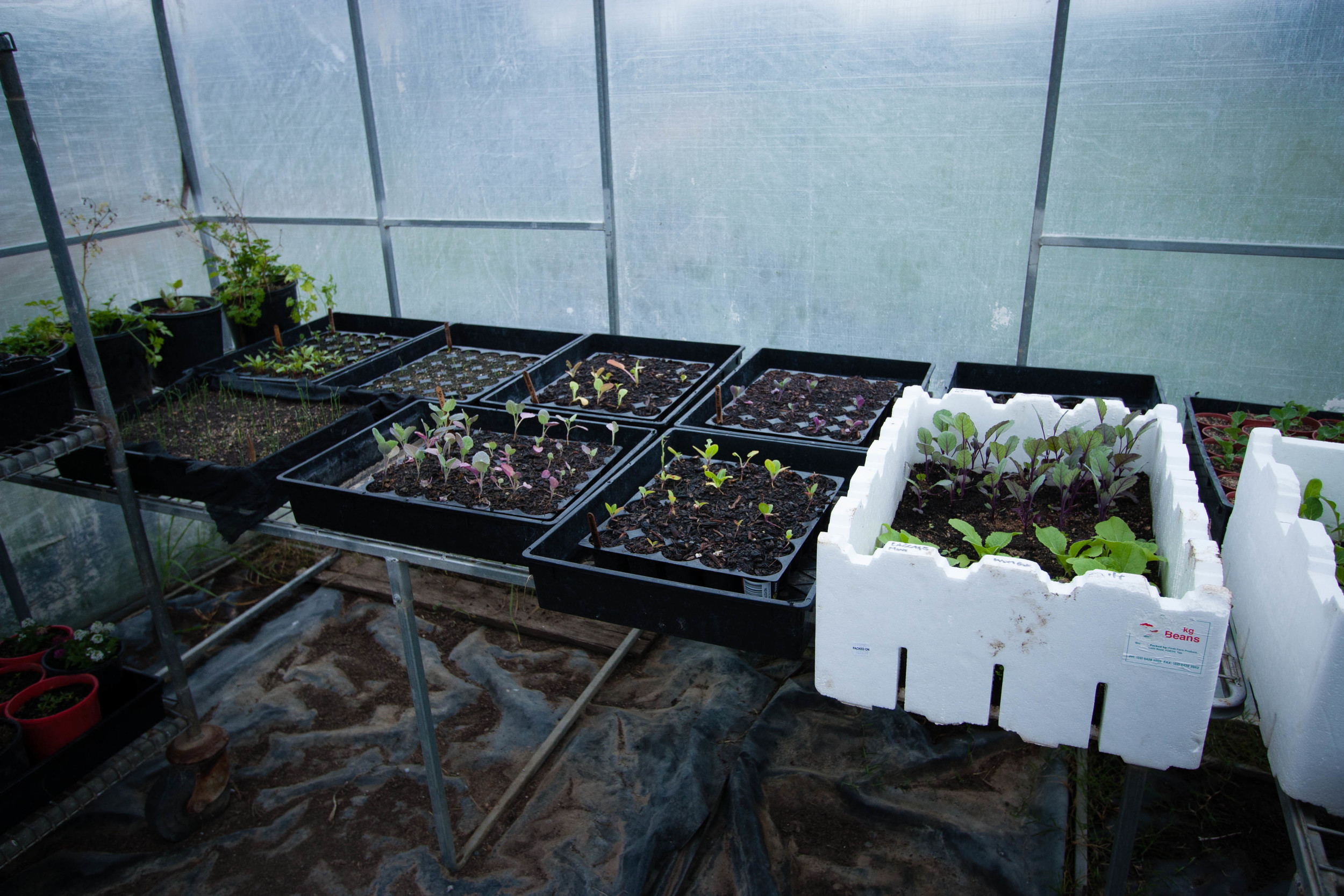 Winter Seedlings    thinkbiglivesimply.com