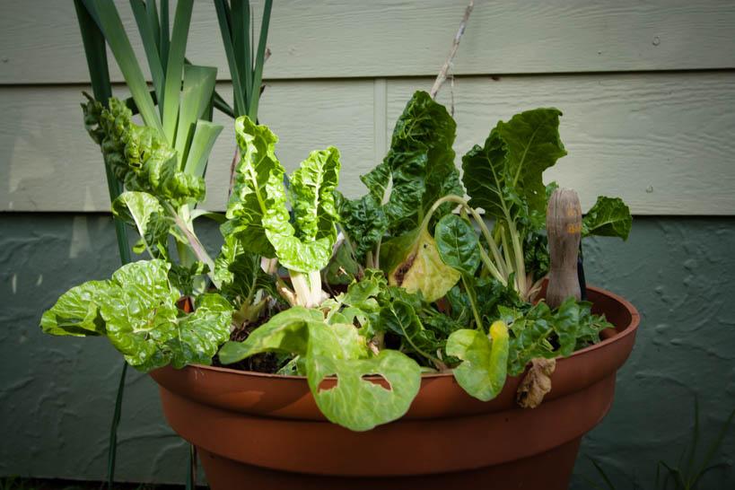 Backdoor Salad || thinkbiglivesimply.com