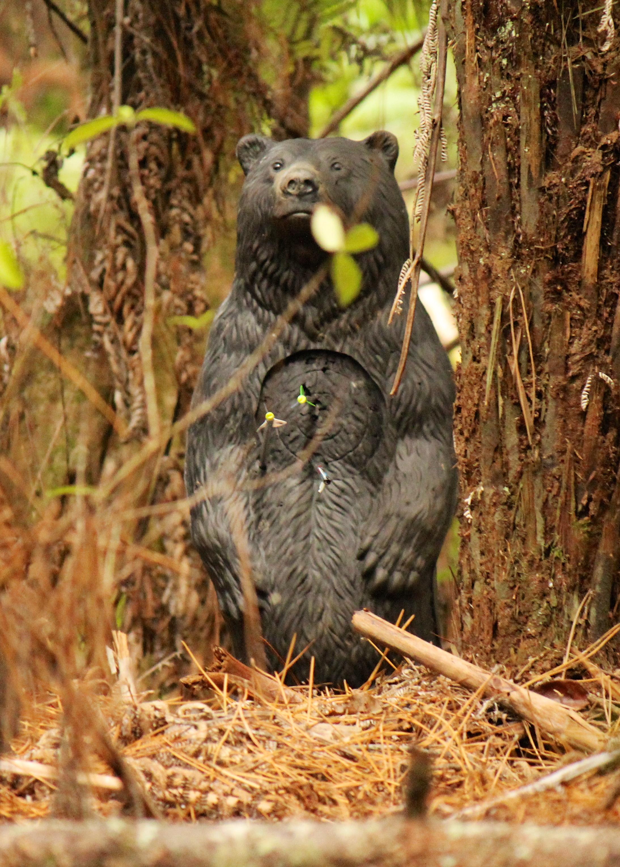 3D Black Bear