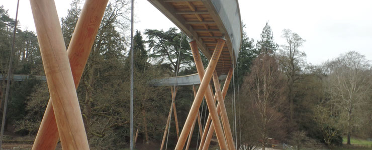 Westonbirt Treetop Walkway 02