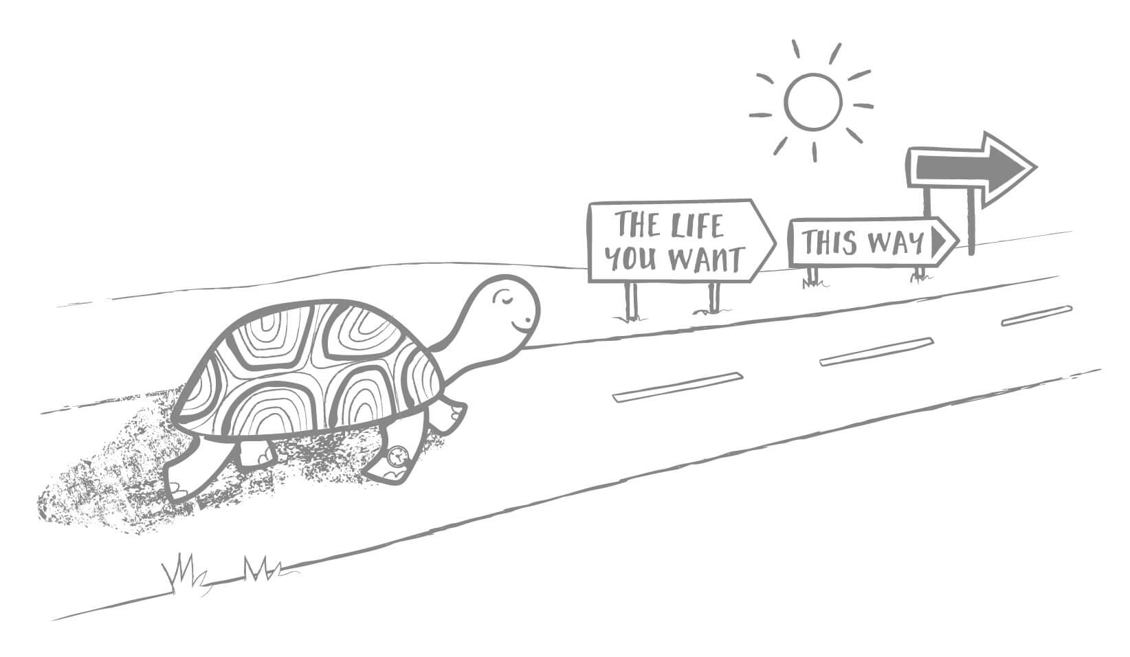 TM_Ch11_Tortoise.jpg