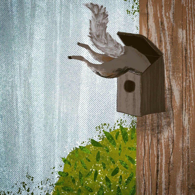 Squirrel BirdBox.jpg
