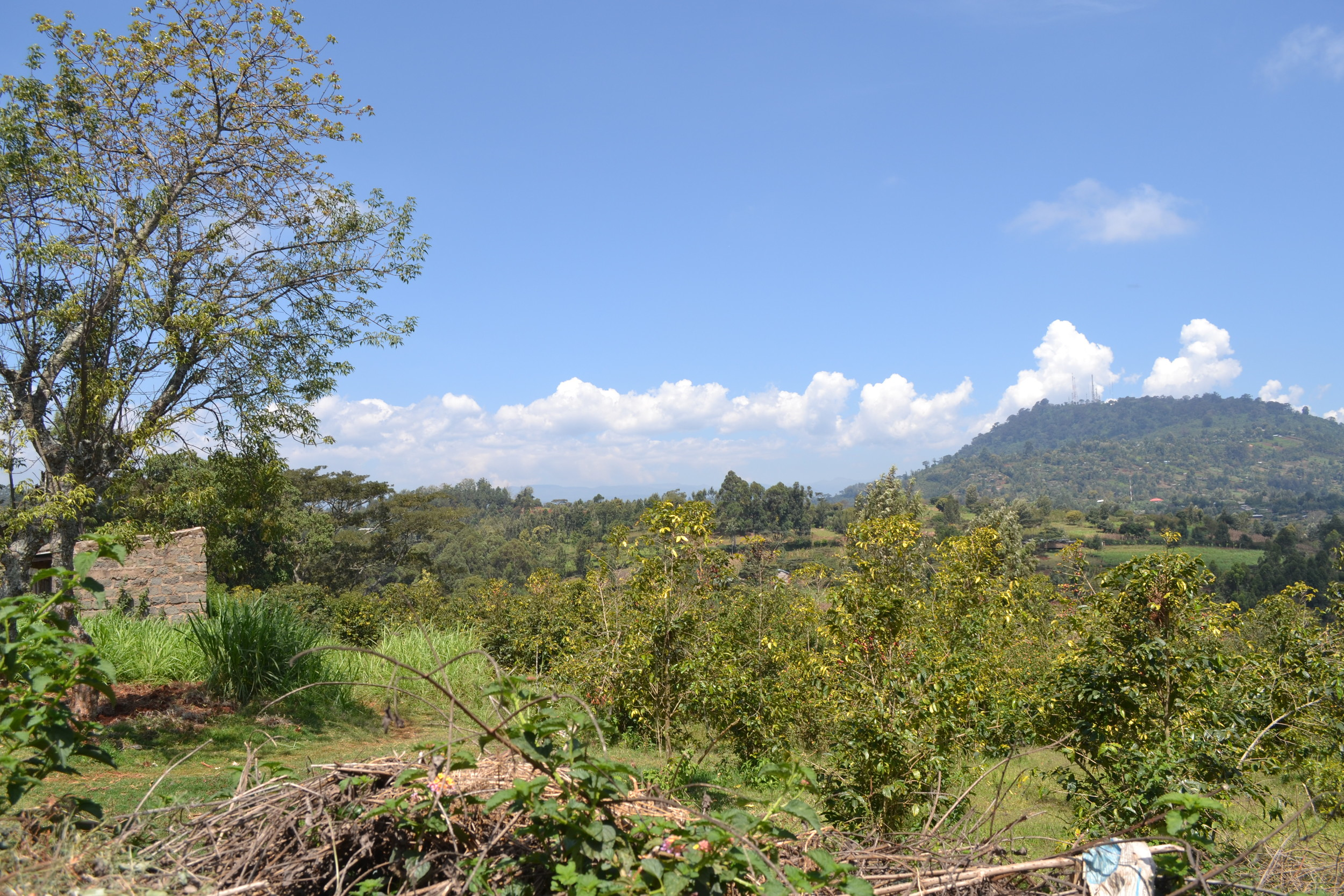 The view from the Metropolitan Sanctuary for Sick Children, Nyeri, Kenya.