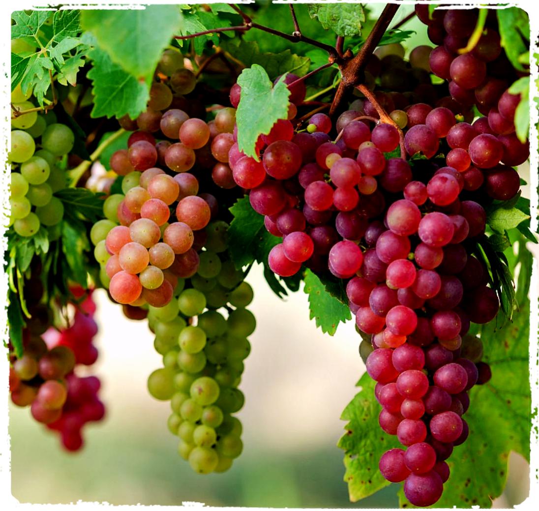 grapes_Fotor.jpg