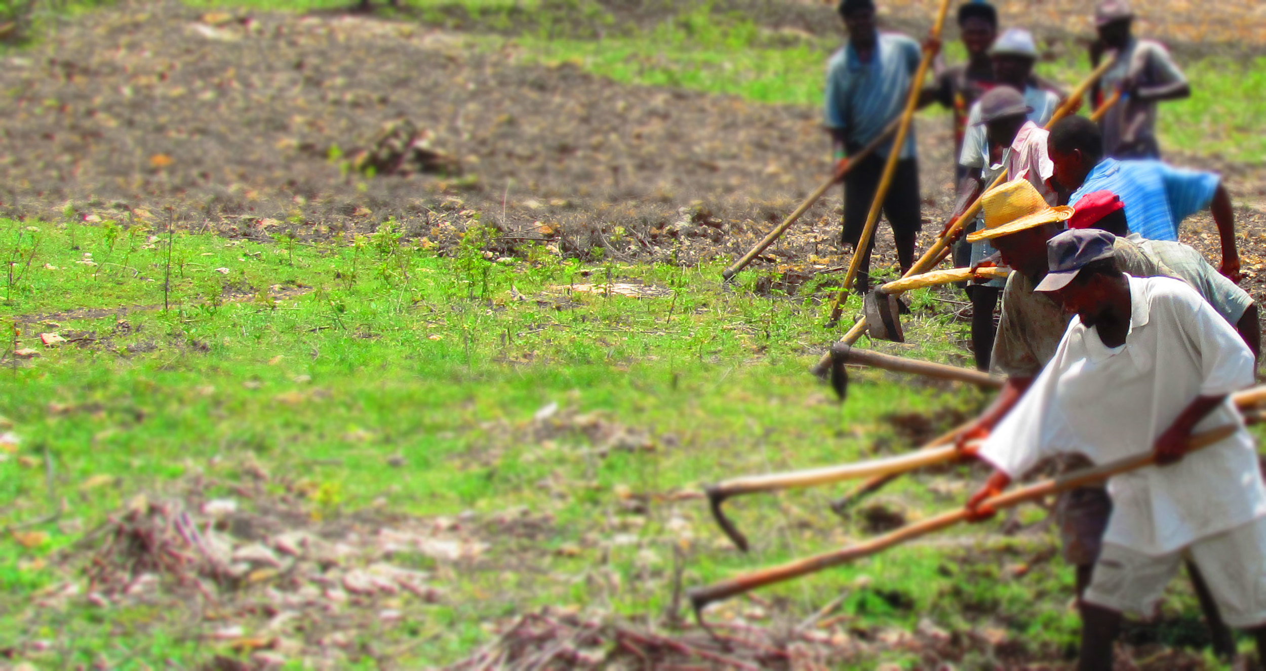 Preparation of parcels of land for plantin