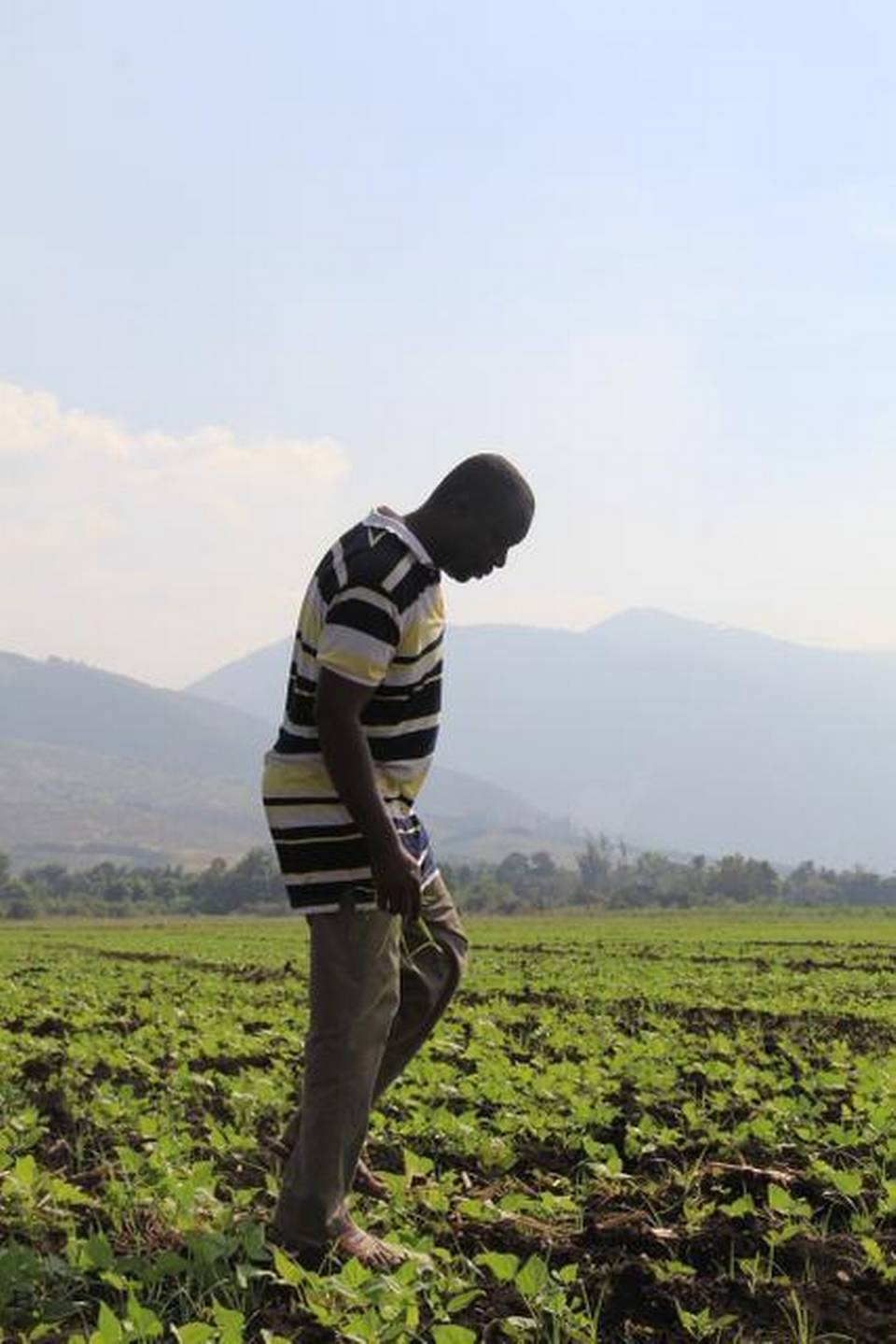 IN HAITI: A farmer who will benefit from a new water-diversion dam just outside Port-au-Prince walks through his field.