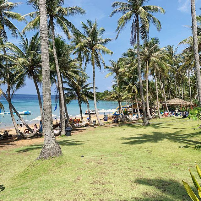 A touch of paradise. . . . #wanderlust #paradise #vietnam #honthom #islandhopping #travelgirl #instapassport #palmtrees #beach #beachday