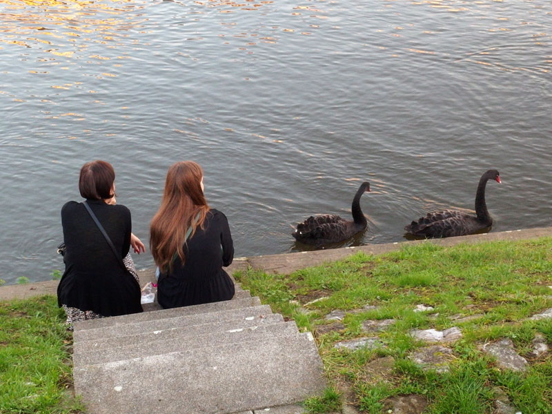 we even saw two black swans on the river