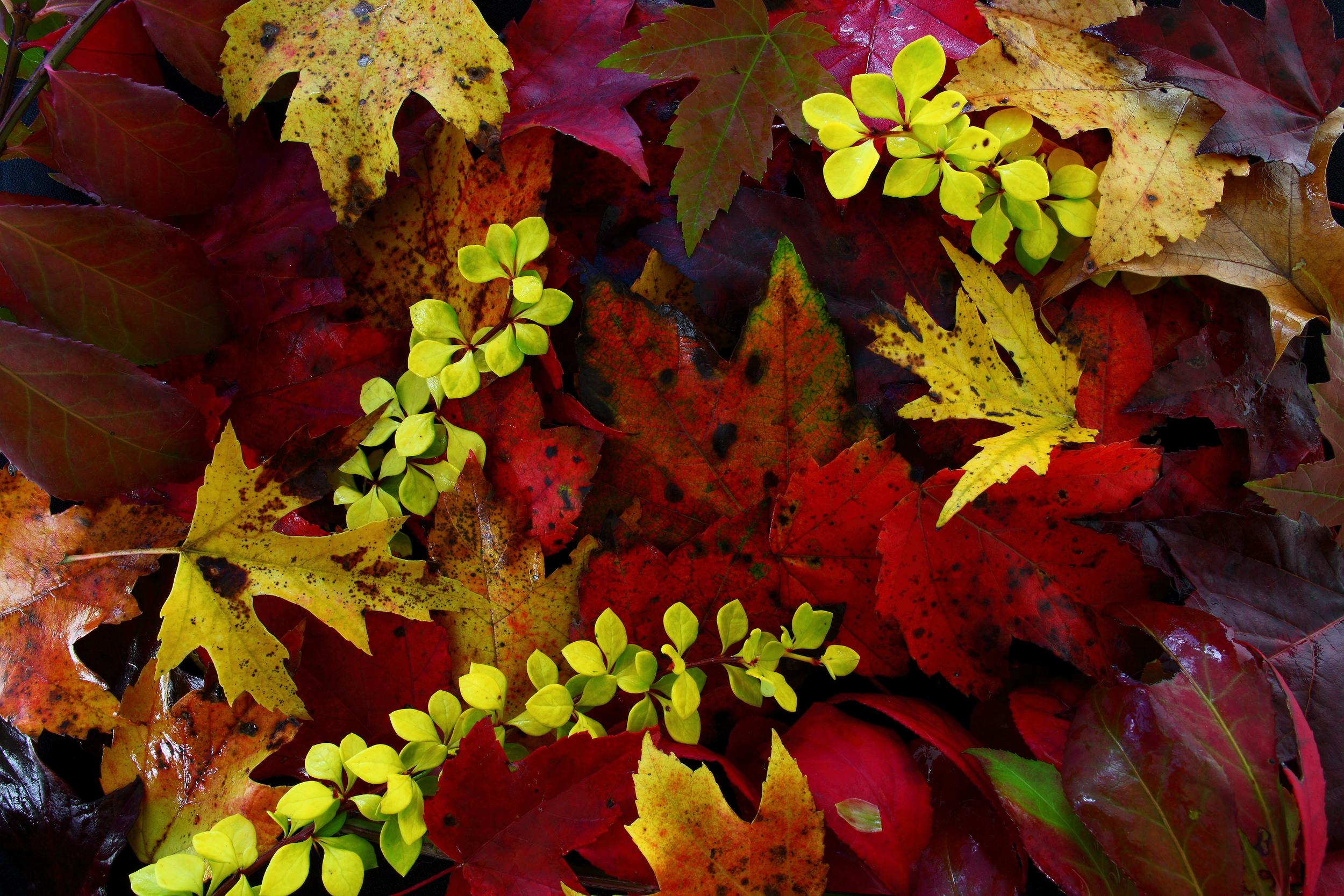 fall-foliage-leaves