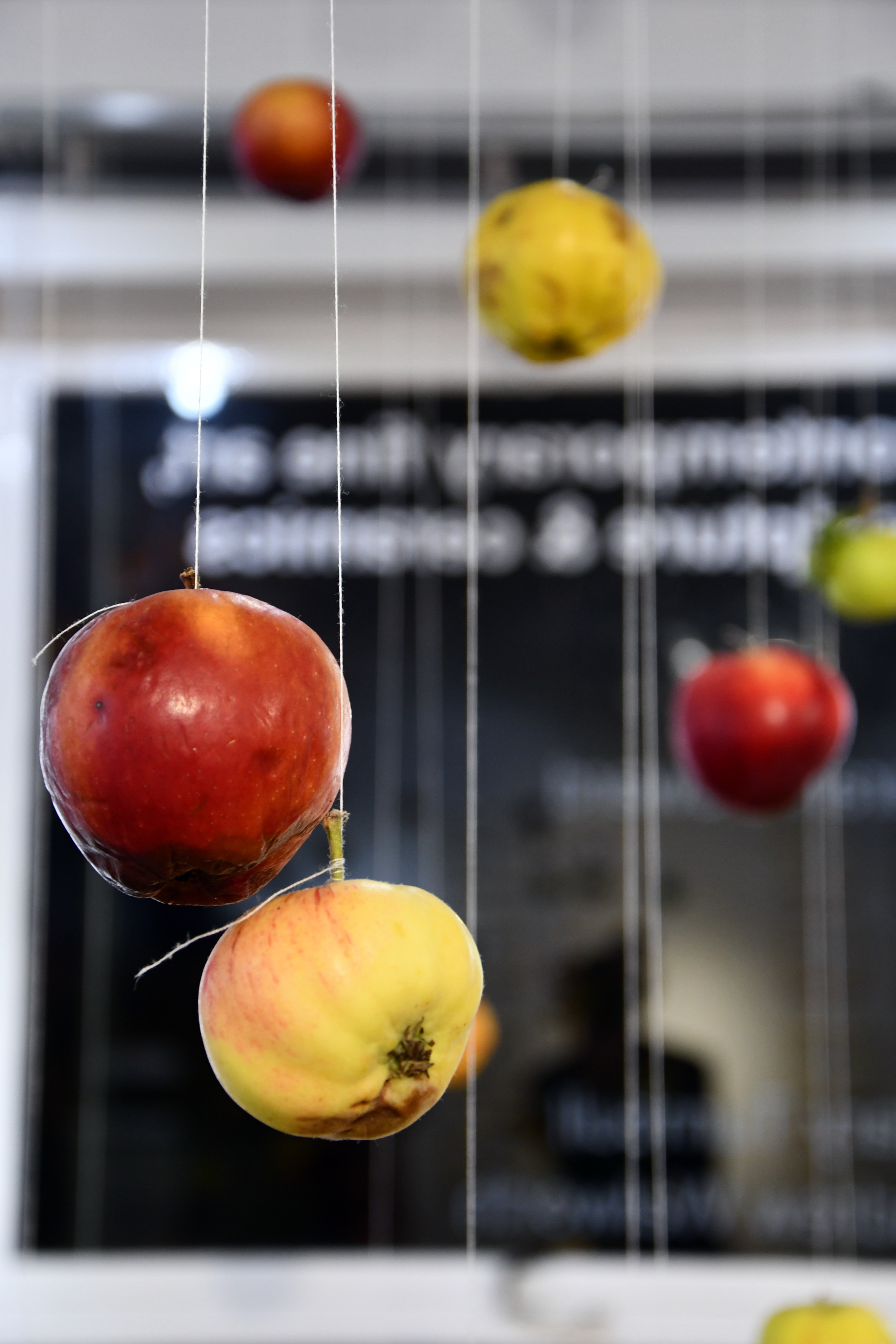 from Reading & Writing with a Tree (apple installation) by Camilla Nelson