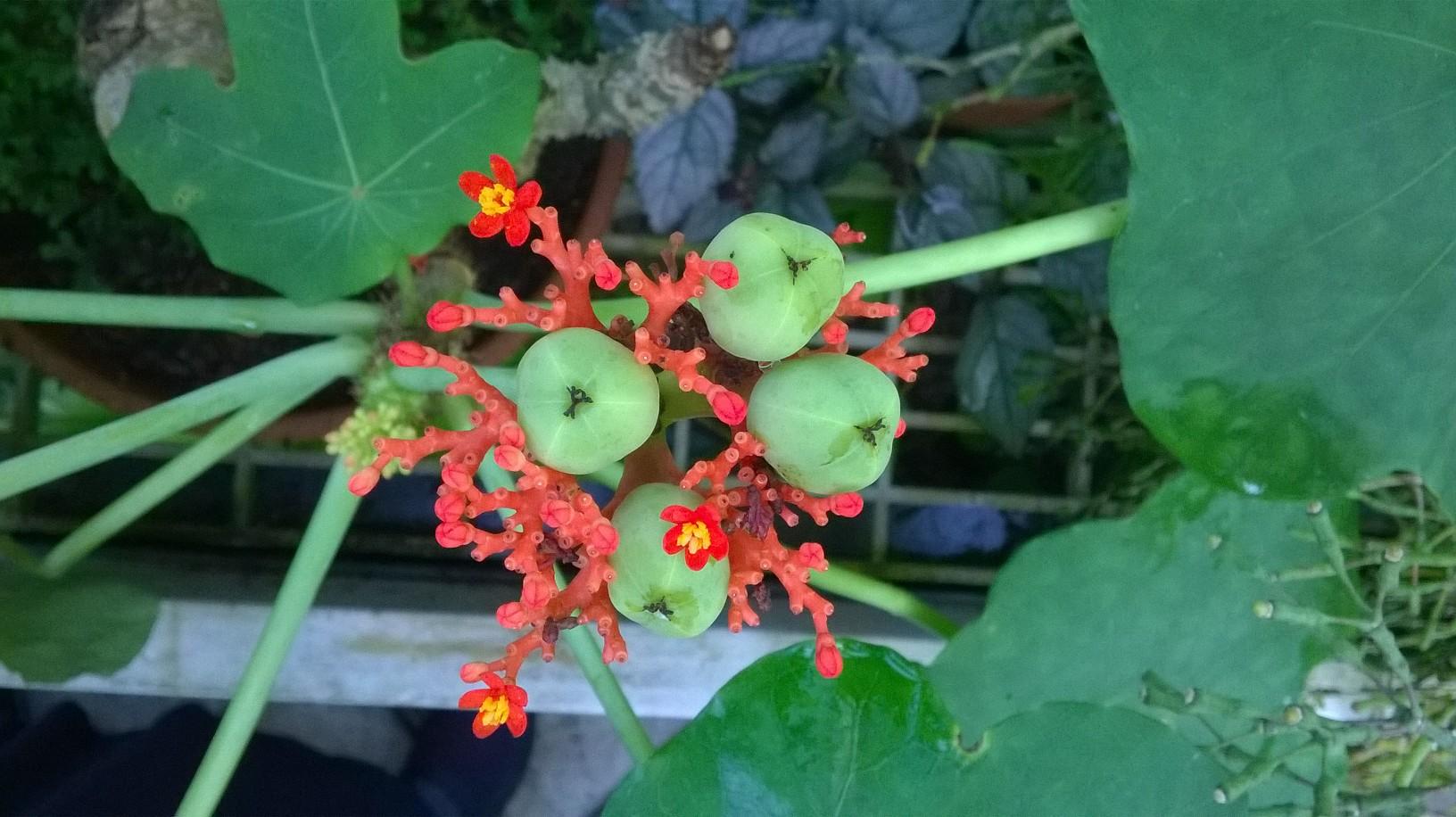 fourberries.jpg