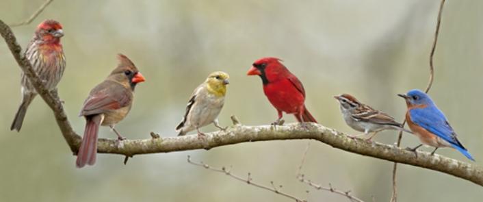 291d8089f3c0e4739b64779c6c6ef4e3--flightless-bird-the-birds.jpg