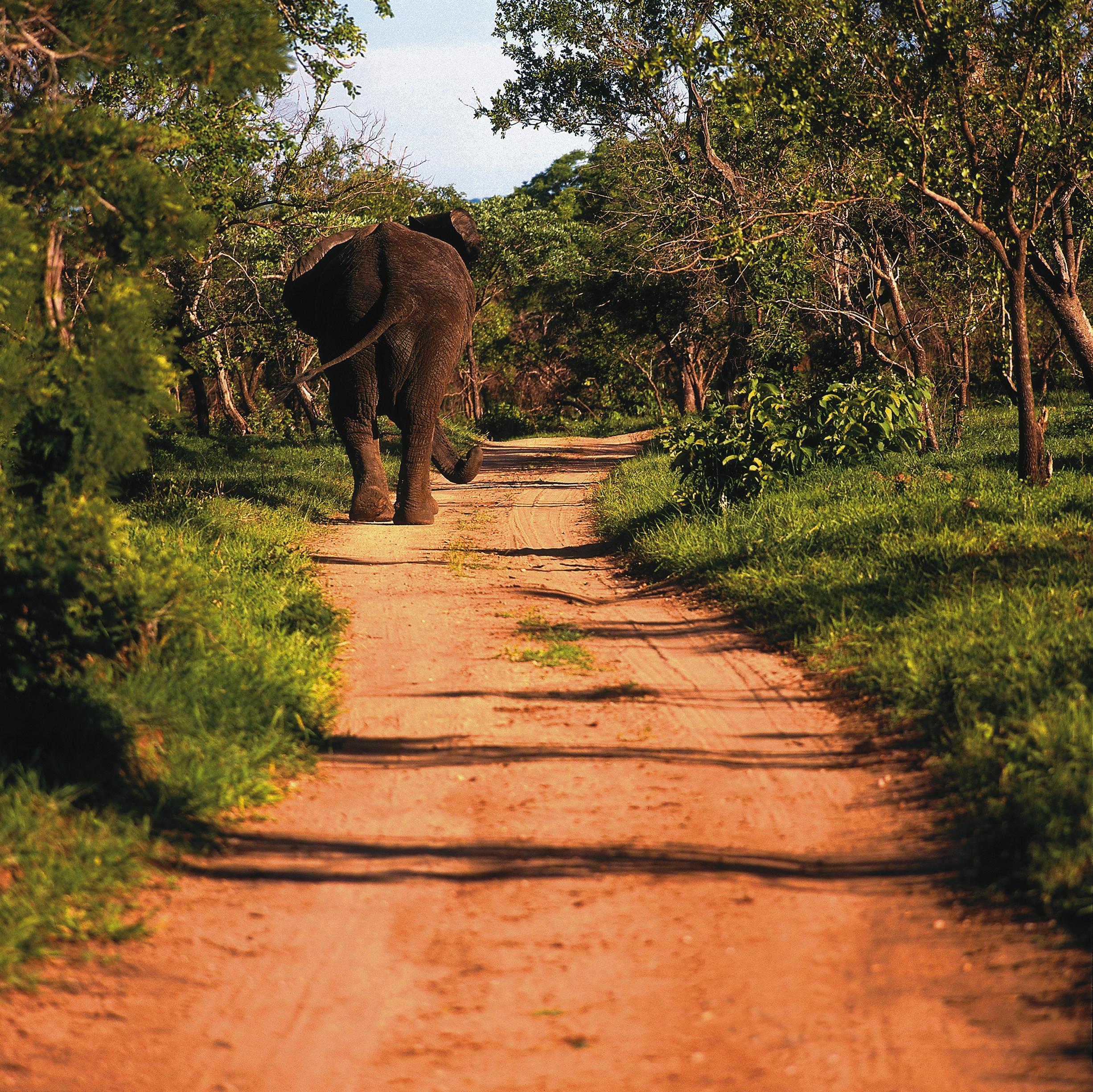 Animals - Elephant.jpg
