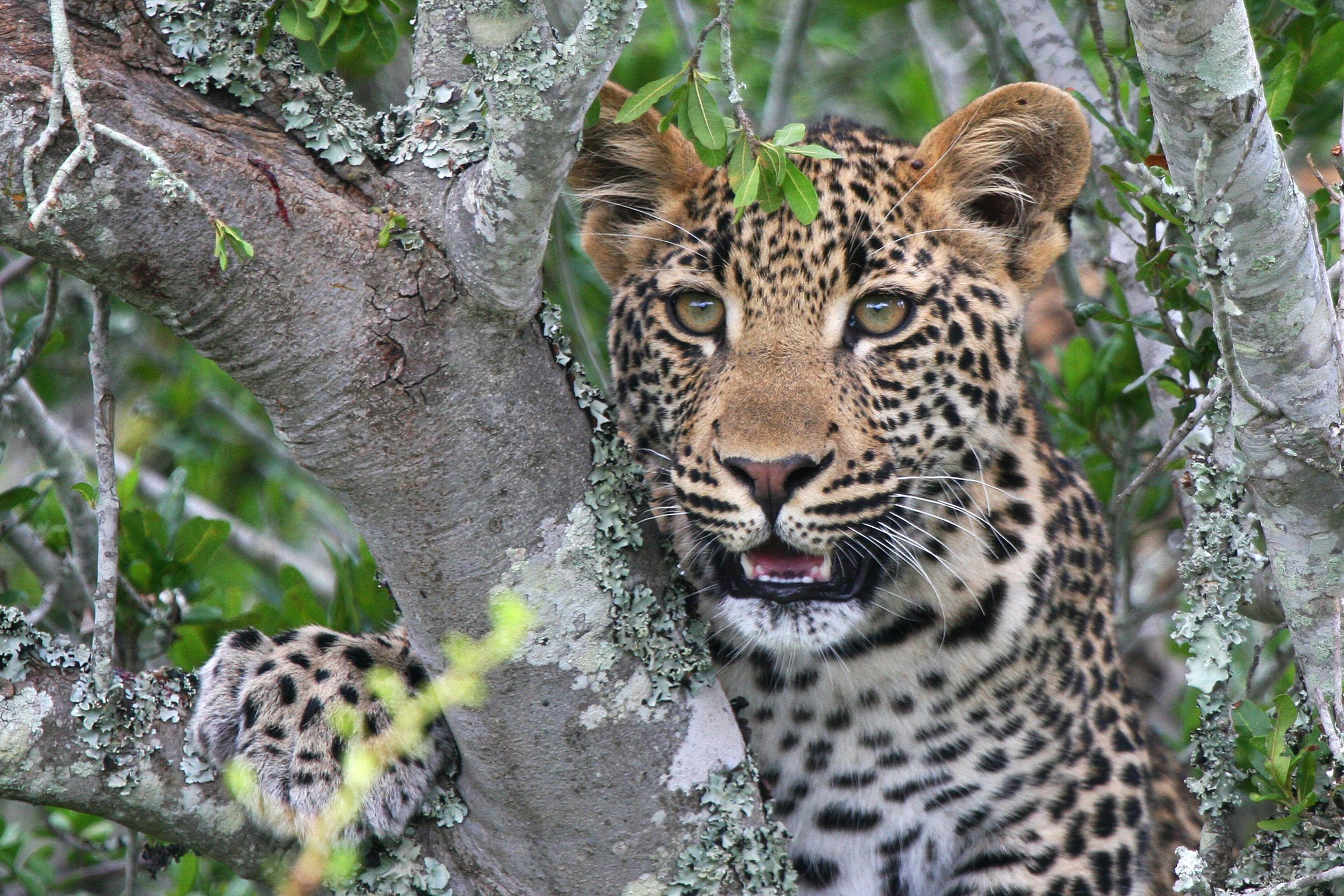 Kwandwe Private Game Reserve,.jpg
