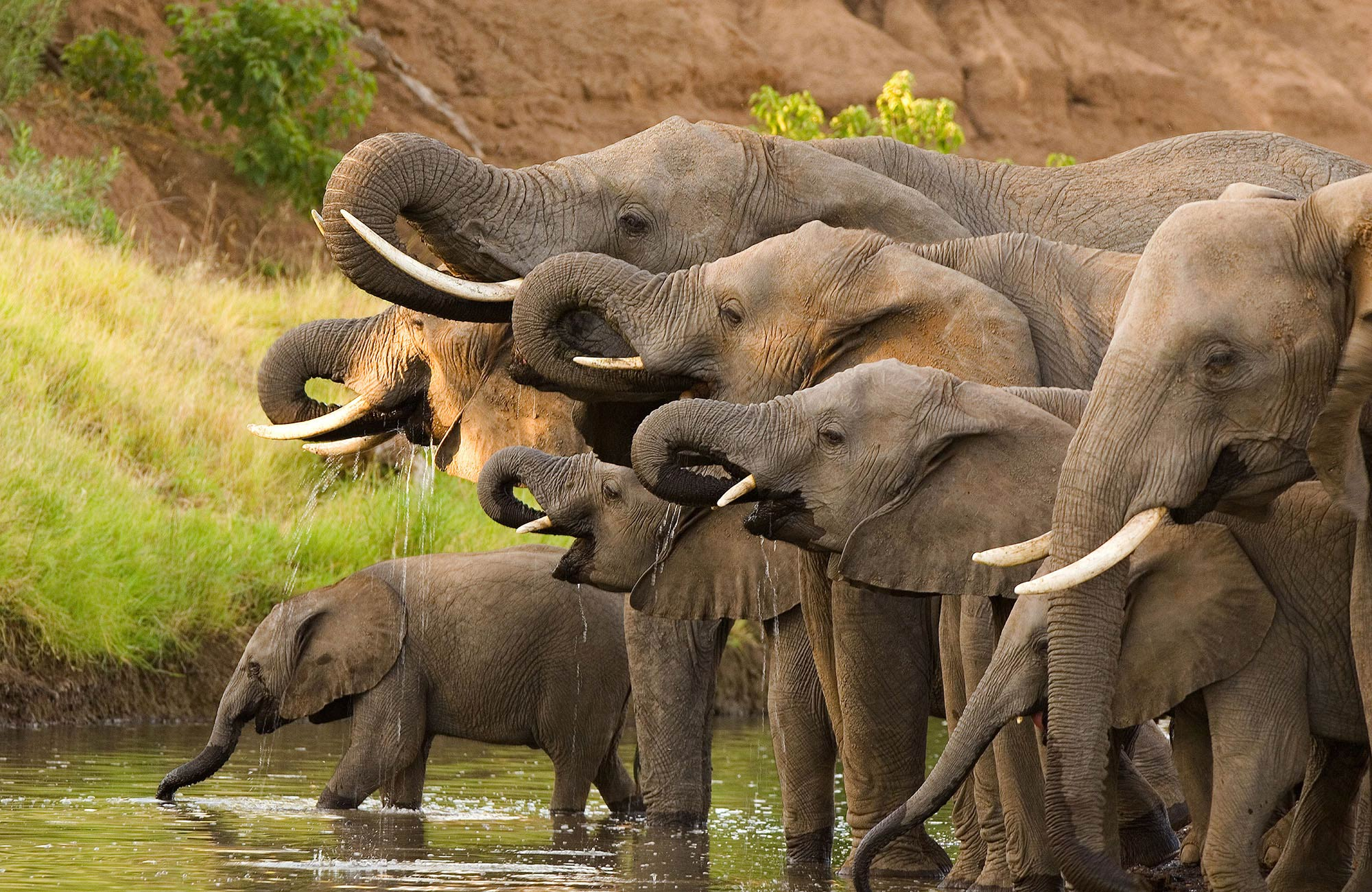 big-five-safari-sabi-sands-elephant-large.jpg