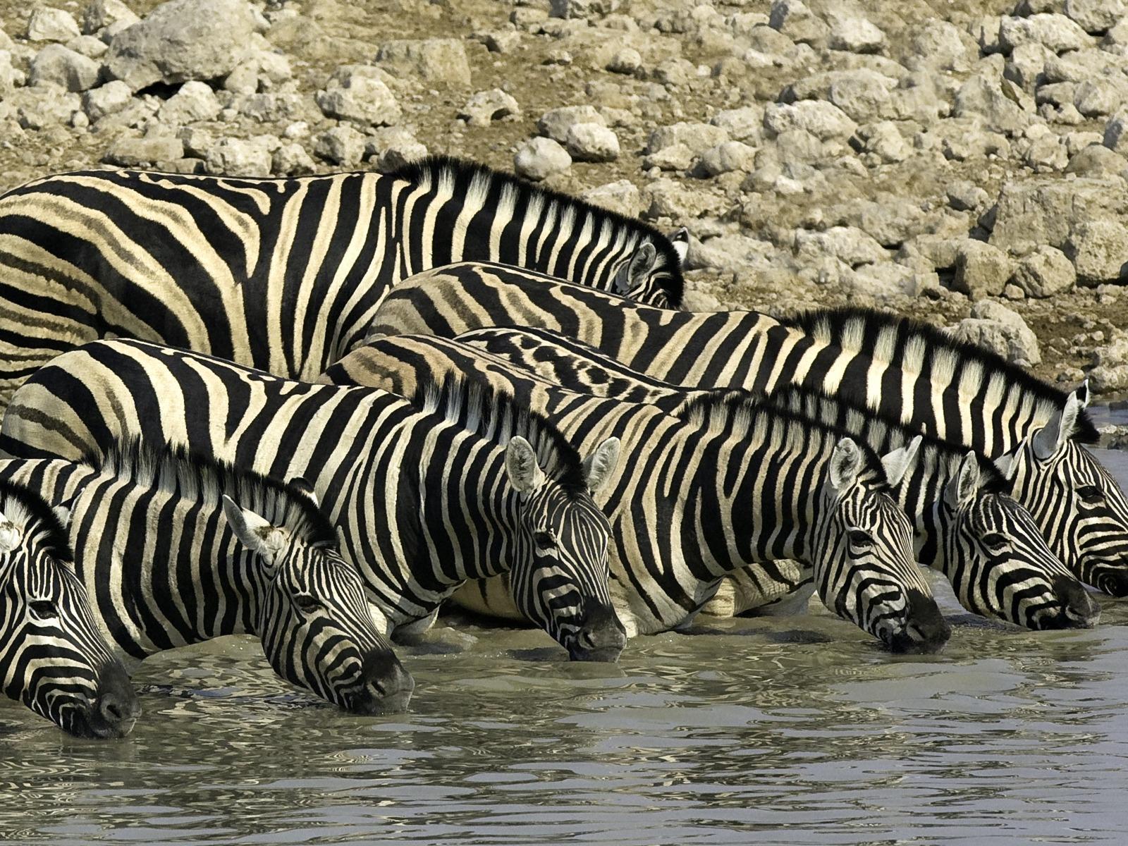 Wilderness Safari - Ongava53_1600x1200.jpg