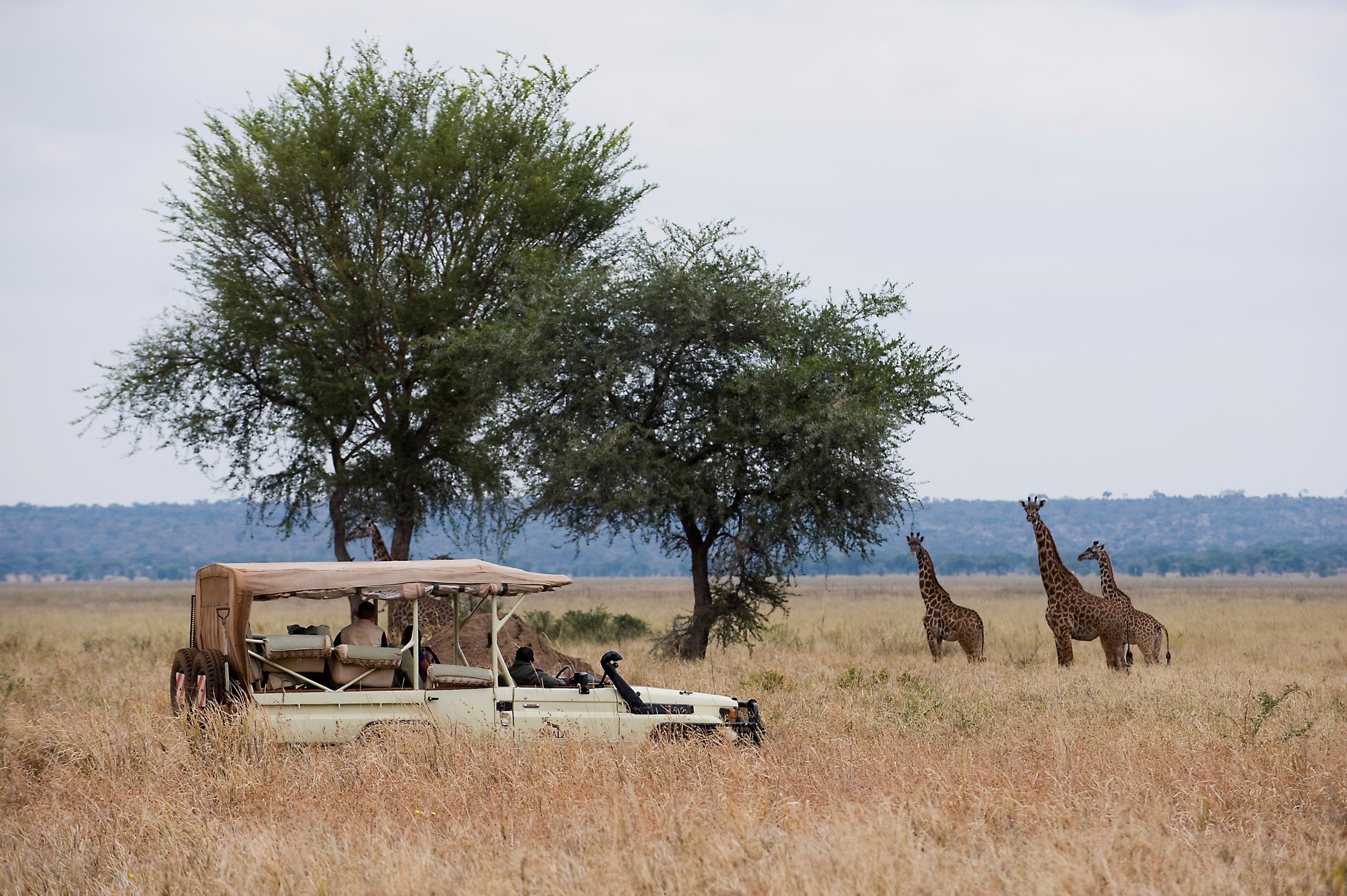 luxury-safari-tanzania-gameviewing-swala-01.jpg
