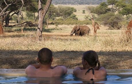 Swala-pool.jpg