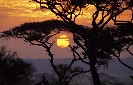 tanzania_swala_-_night_drives.jpg