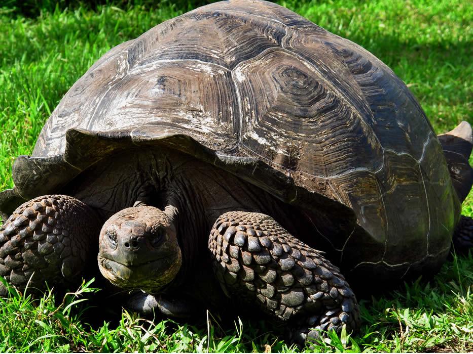 Galapagos-Finch-Bay-giant-turtle.jpg