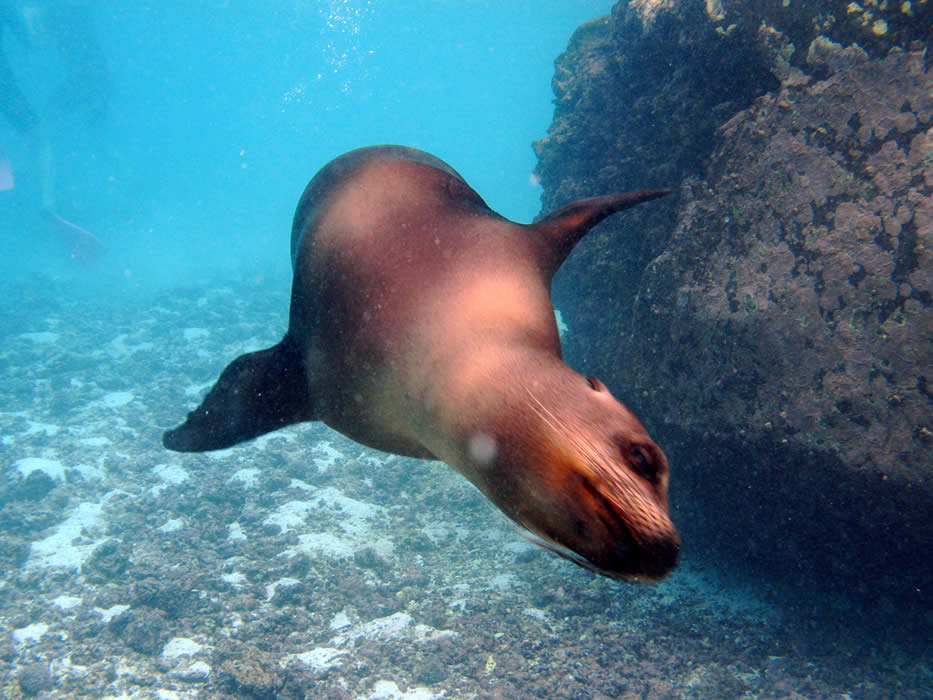 Galapagos-Finch-Bay-sea-lion.jpg