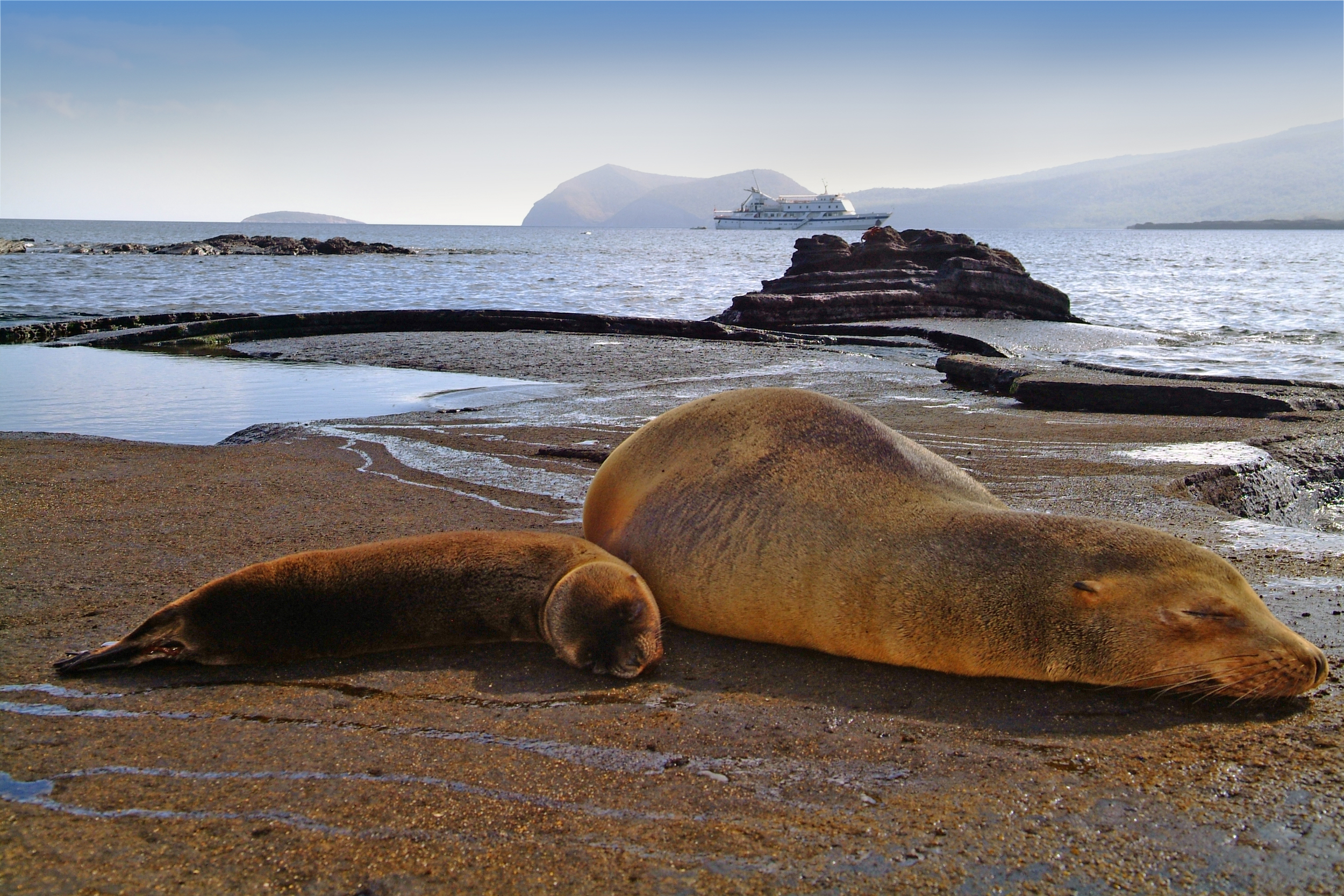 Eclipse & Sea Lions 2.JPG