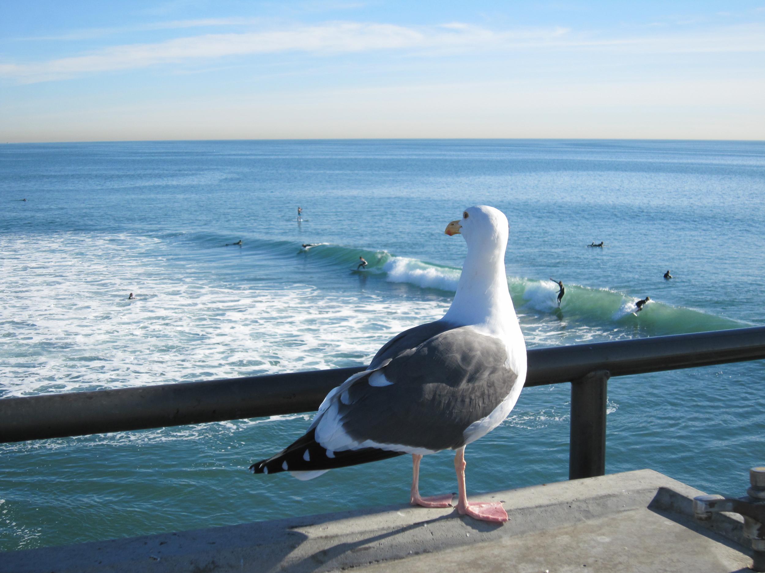 California Jan 2012 - 1316.jpg