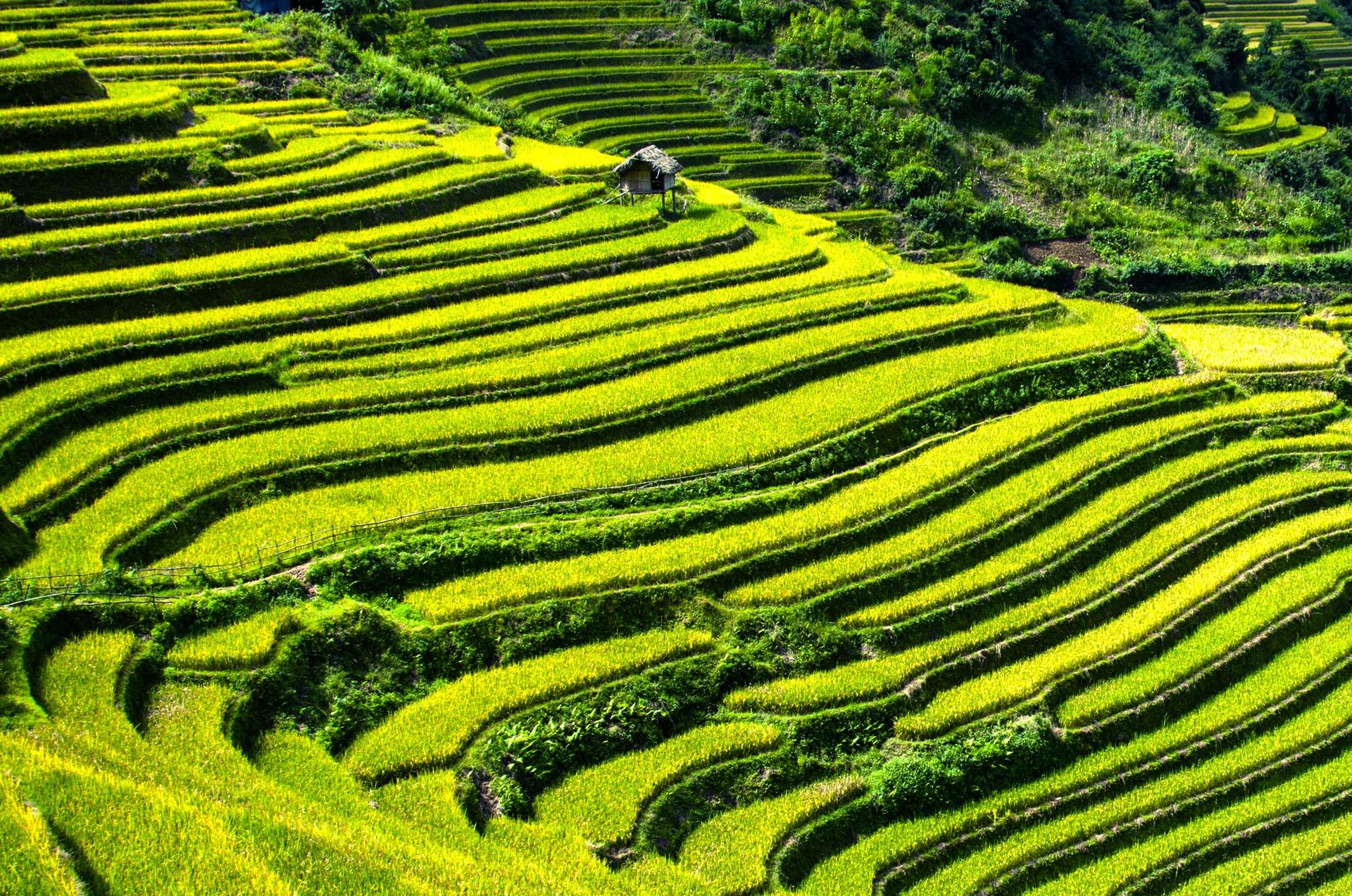 rice-terraces-164410.jpg