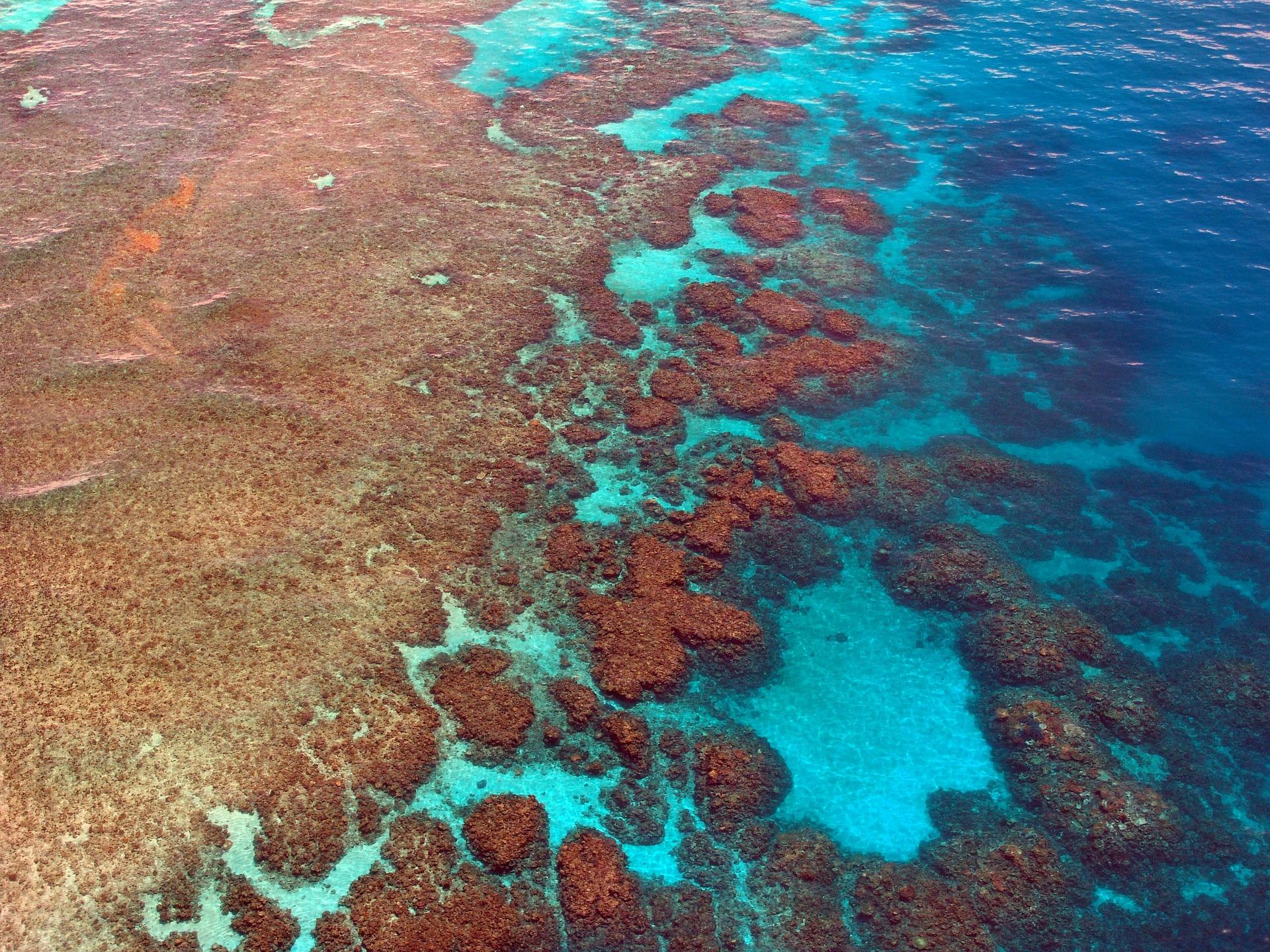great-barrier-reef-261726_1920.jpg
