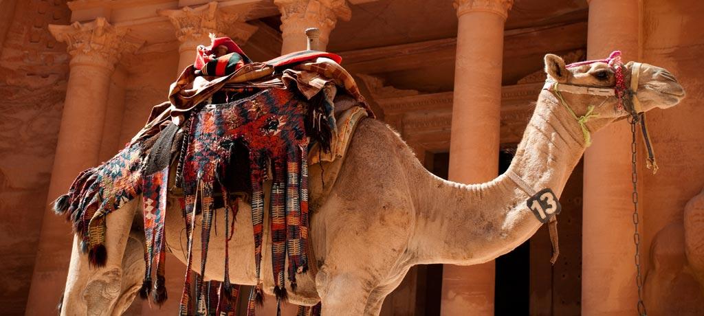 Jordan-Petra-Treasury-Camel-(1024x460).jpg