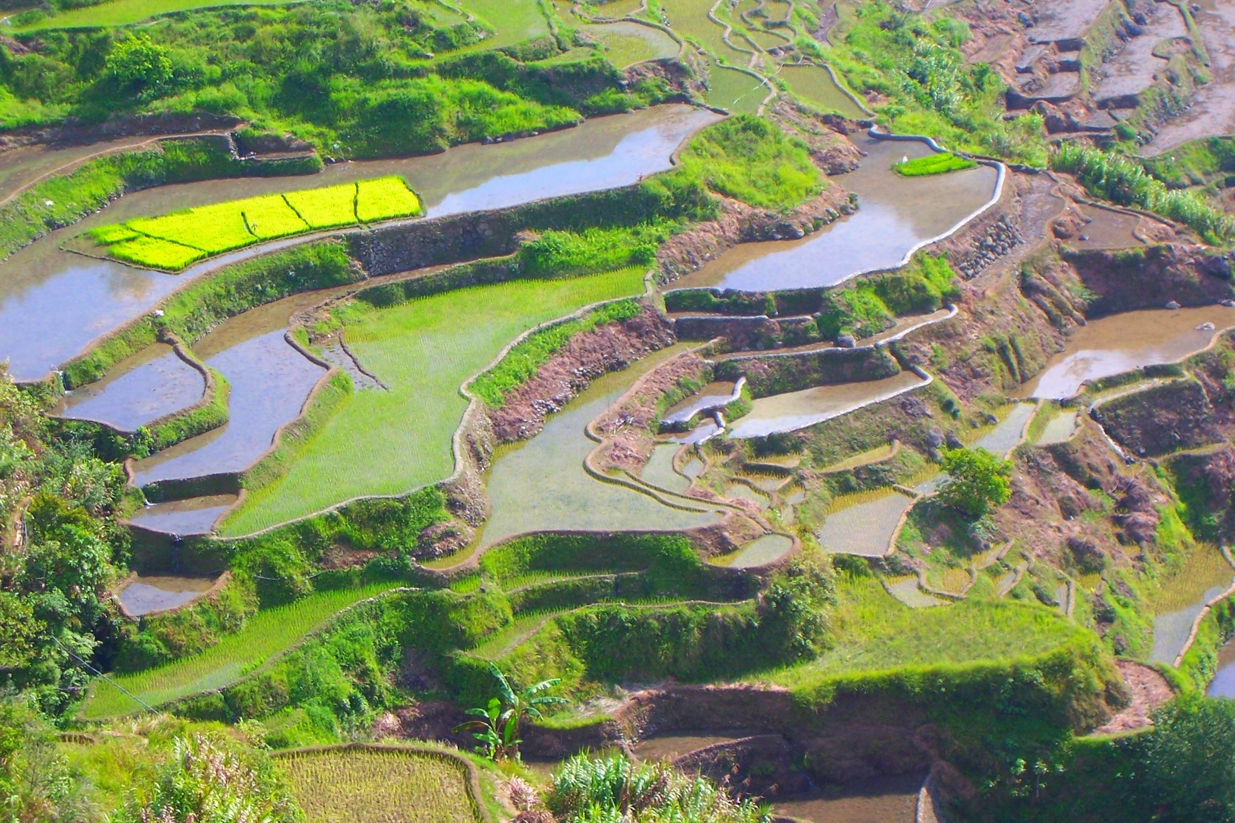 terraces-934442.jpg