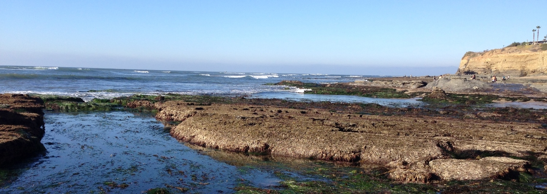 masthead pic - shoreline 2.jpg