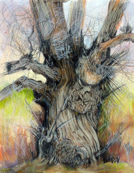 Cottonwood_with_Burls_Springtime_sm.jpg