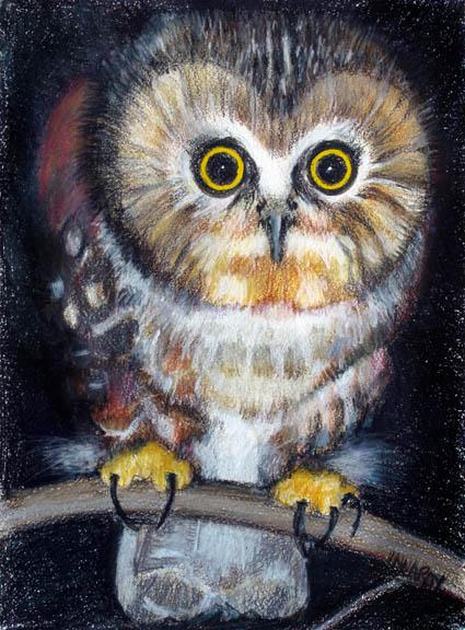 owl_sawwhet_spook_eyed_sm.jpg