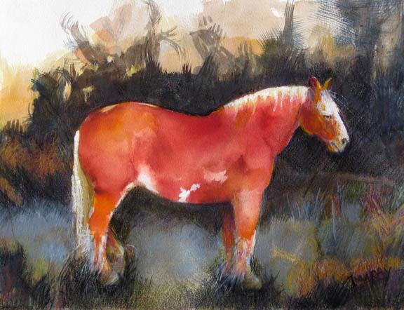 Red_Drafthorse_winter_field_sm.jpg