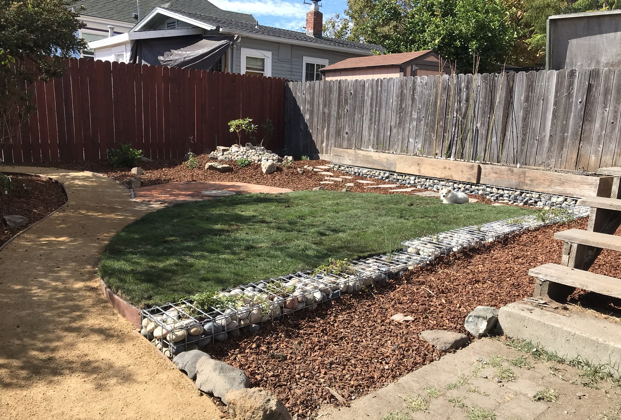 This was an exciting project that completely transformed this backyard in Berkeley from an unusable space into a CA Native plant oasis. We used bricks onsite to build an octagonal brick patio, lumber onsite to build a custom veggie bed, created a mound to plant a Madrone tree, Manzanita, Buckwheat, sage and purple needle grass, and planted woodland species under the Oak overstory. The lawn is a native drought tolerant species of Agrostis Pallens.
