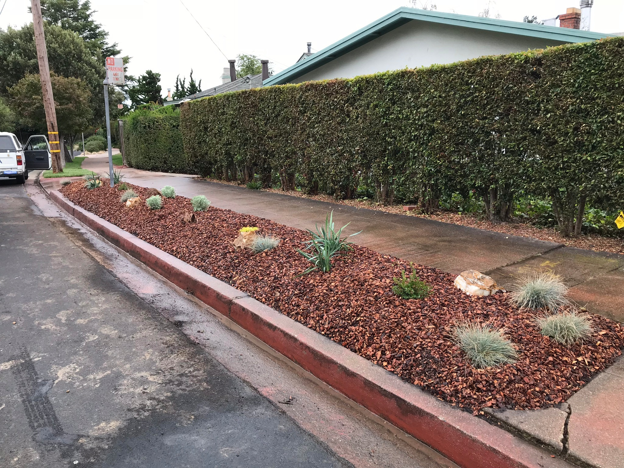 This front parkingstrip is in full sun and in the hills where deer frequently walk by. I chose plants which are low maintenance, deer resistant, and drought tolerant. We sheet mulched to keep down the weeds then planted.