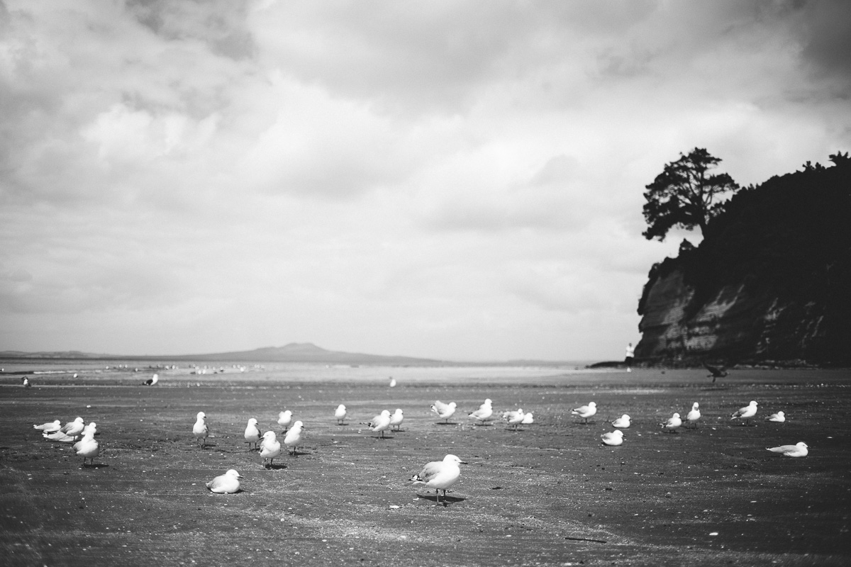 new zealand auckland black and white travel blog photography browns bay