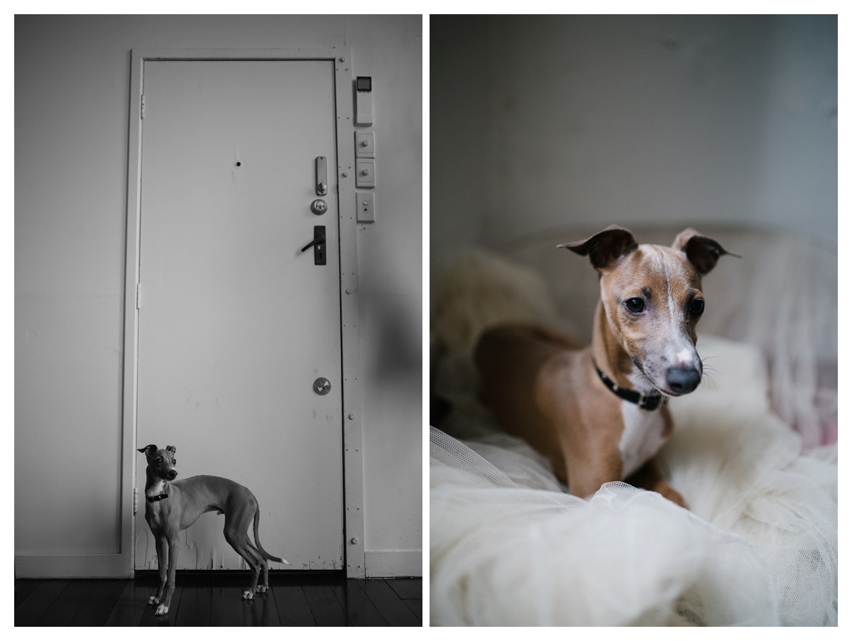 creative female photographers thievery studio auckland nico dog